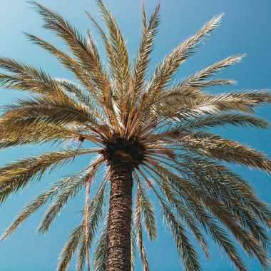 Photo by Vincent Gerbouin on Pexels.com